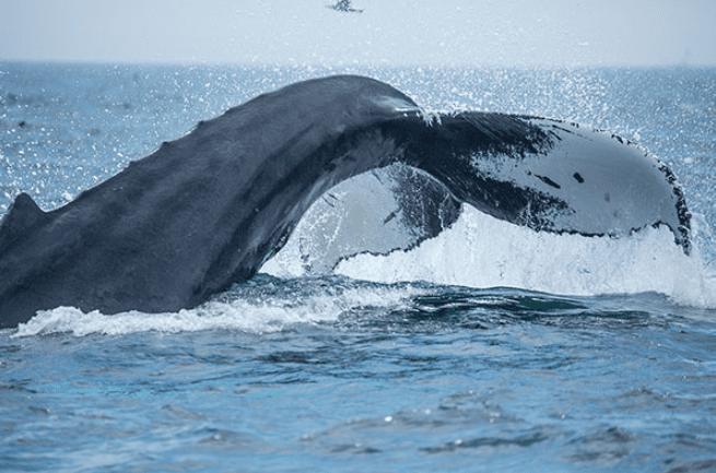 Deborah Ann Whale Watching